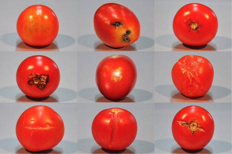 Cherry Tomato Vision 2 UNITEC Technology