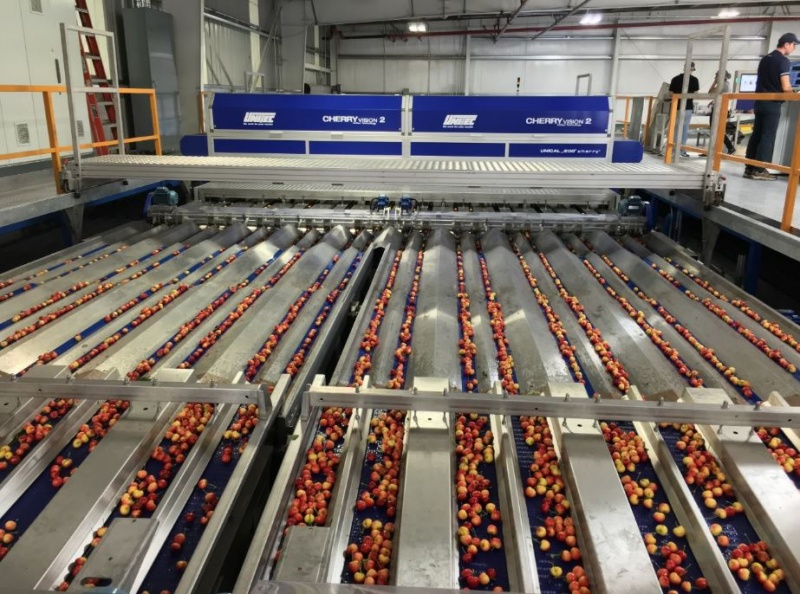 UNITEC launches a new system with worldwide strong innovations that can process both red cherries and rainier cherries at Morada Produce company of Linden, California